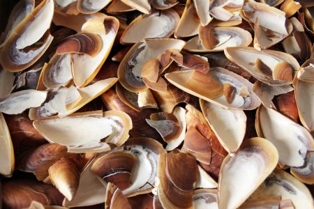 shells cooked